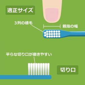 歯ブラシの適正サイズ