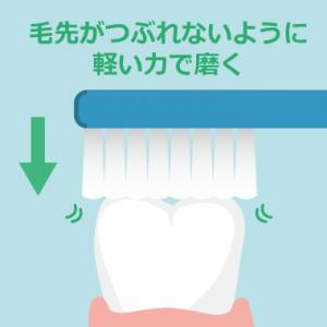 奥歯の噛み合せは軽い力でブラッシング