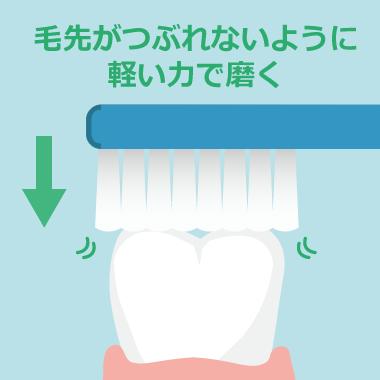 奥歯の噛み合わせ部分に対して軽い力で磨く