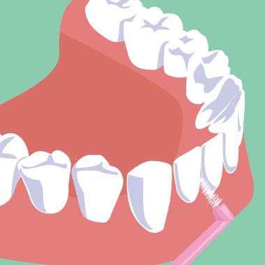 歯間ブラシ 前歯の磨き方