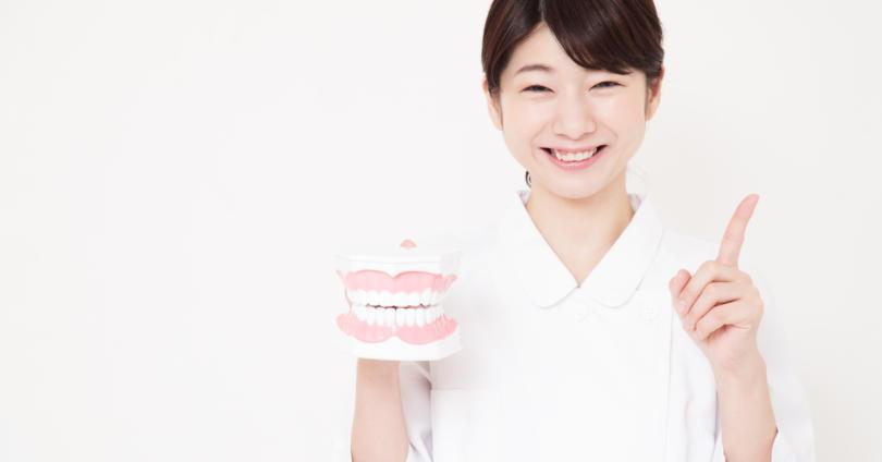 笑顔で歯の模型を持つ歯科衛生士