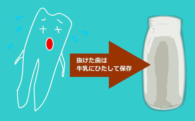 歯の保存方法