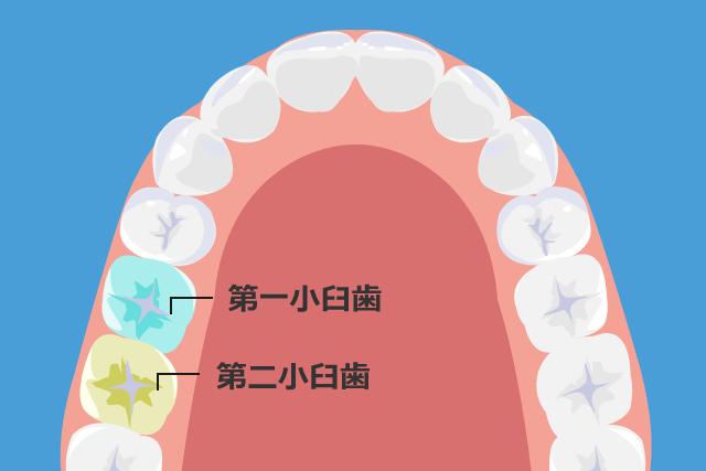 保険適用の歯