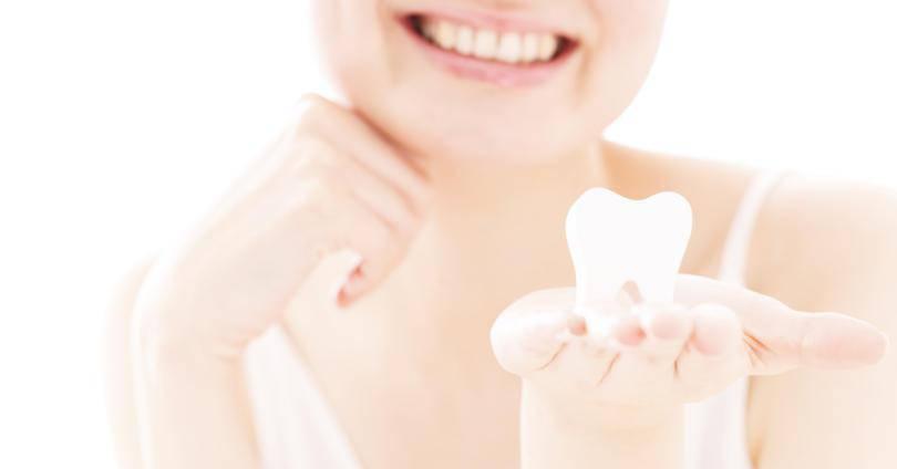 歯の模型を持つ笑顔の女性